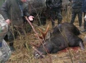 В Словечно нашли мертвого лося