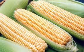 Рынок кукурузы США под давлением курса доллара