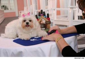 Спа-салон для собак