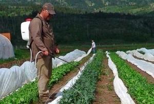 Применение при обработке семян и растений пестицидов