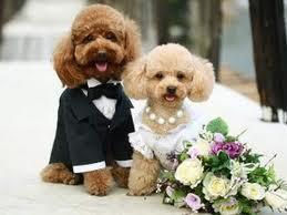 А свадьба пела и плясала!